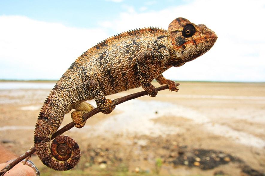 Madagascar (Planet Viaggi)