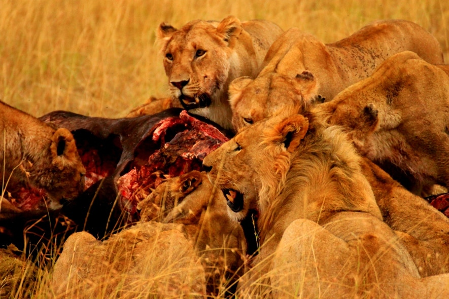 Safari   Maasai Mara 4 (1024×653)