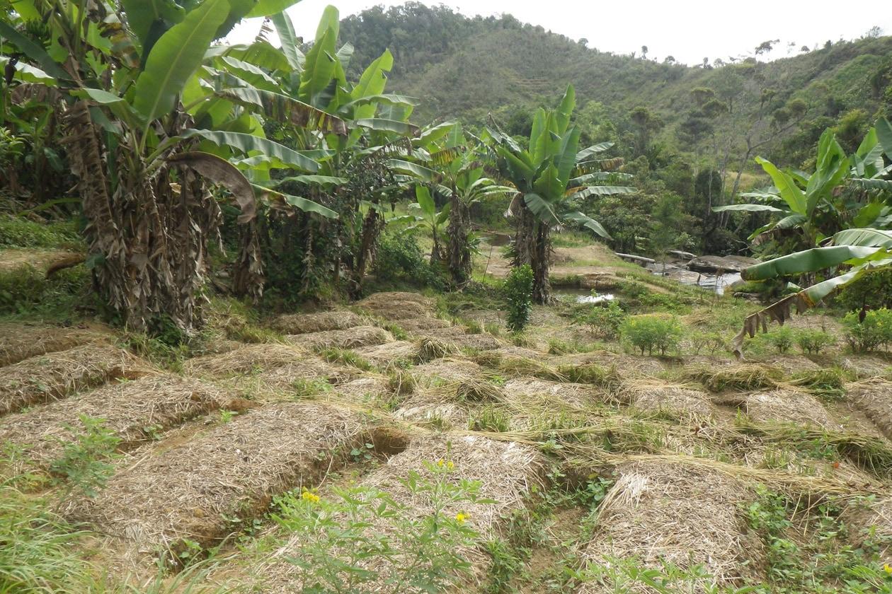 Plantation (2)