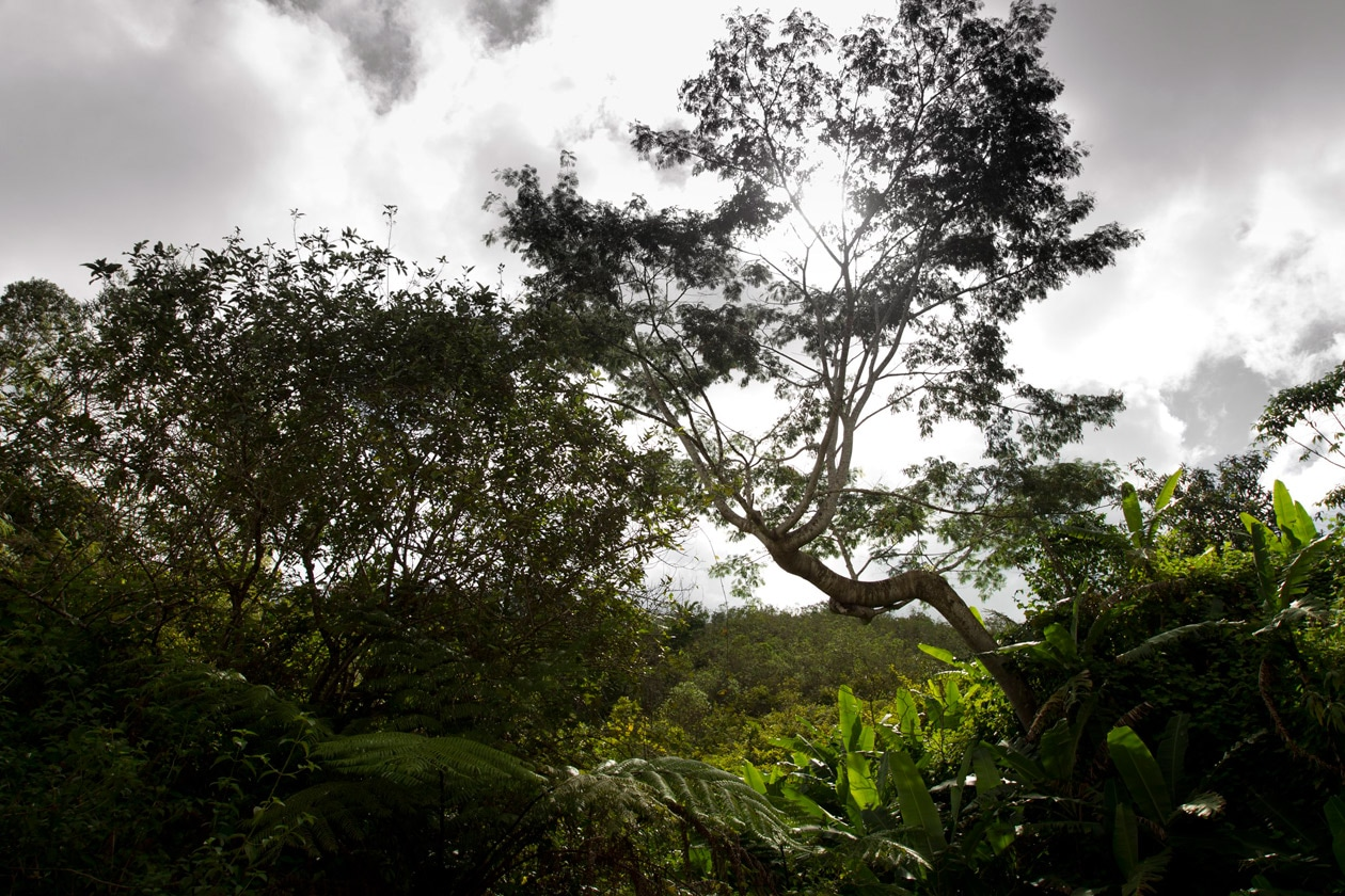 Vohimana Landscape (12)