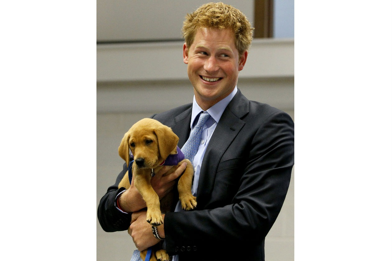 harry_prince_puppy