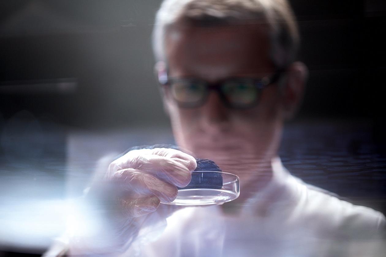 Da 10-15 chilogrammi di Tartufi Black Diamond si estrae un solo chilogrammo di puro estratto che sarà ulteriormente raffinato per rivelarne le sue proprietà intrinseche