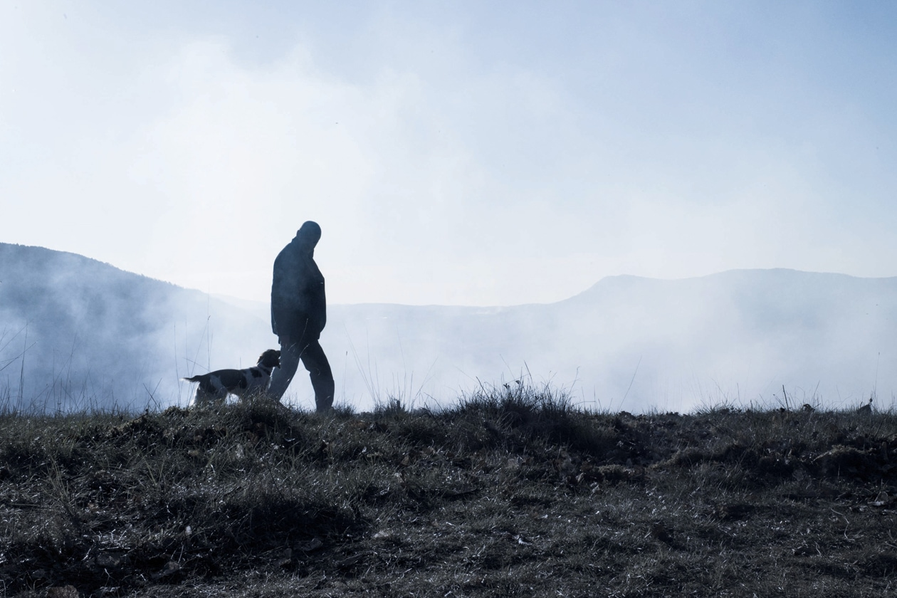 Negli anni più recenti, i cani sono diventati i compagni preferiti dei coltivatori di tartufi per la caccia dei preziosi tuberi