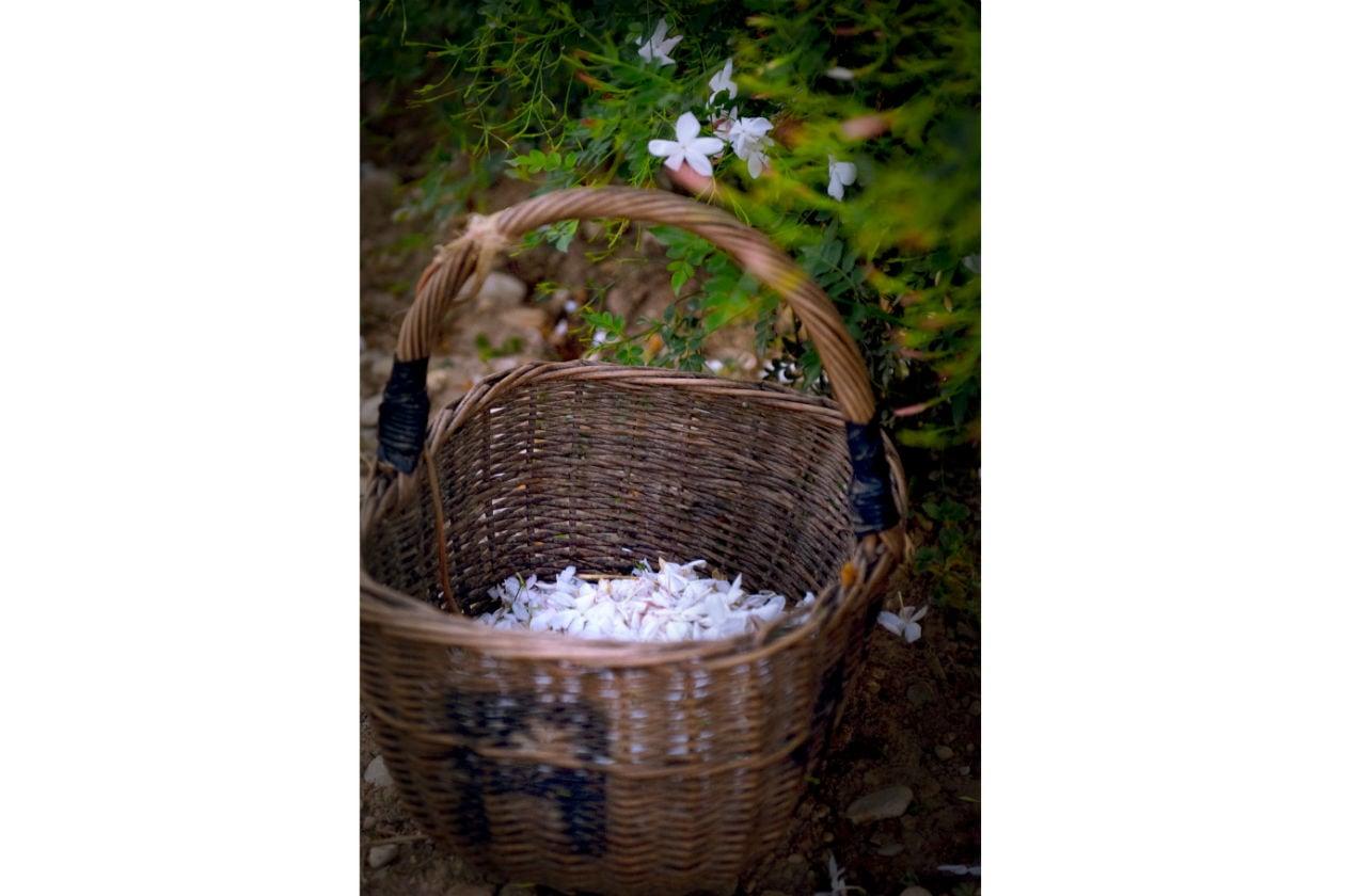 Il cesto utilizzato per il raccolto