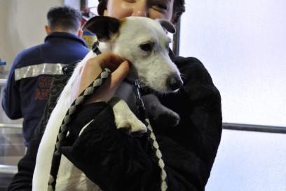 Il piccolo cane di famiglia sempre presente nei backstage