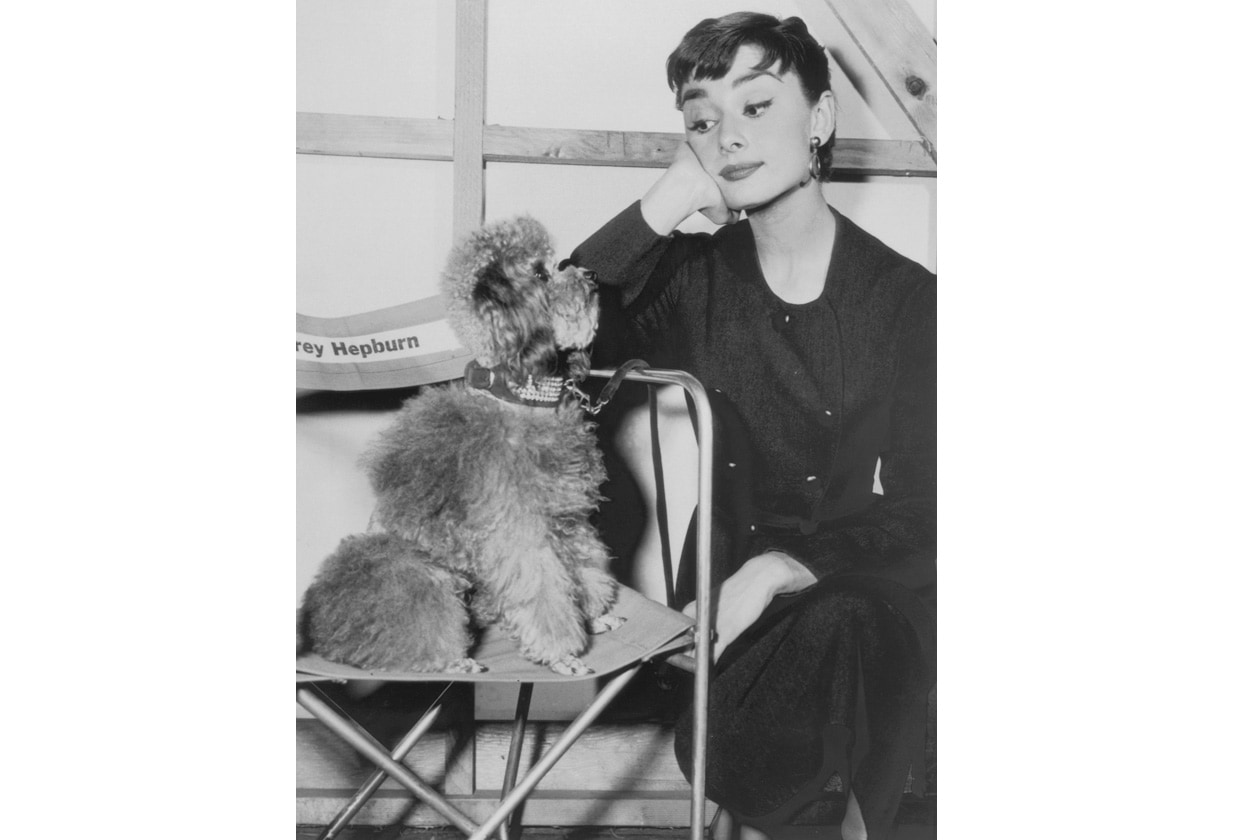 audrey and poddle