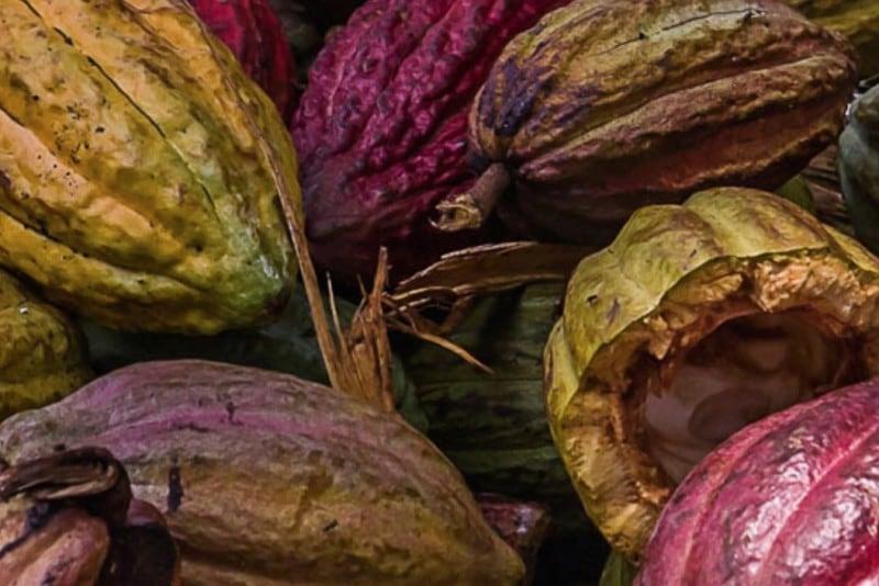 original Semi Cacao