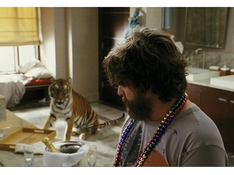 notte da leoni tigre hangover