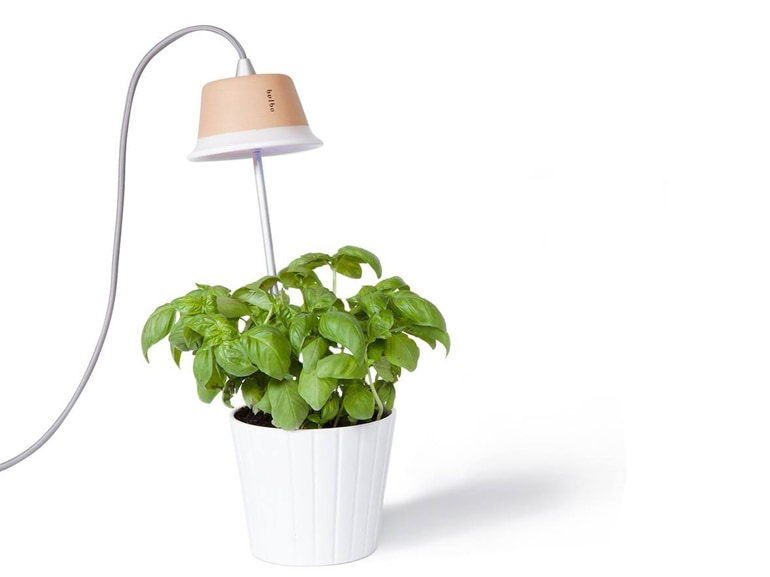 Bulbo Lights Cynara