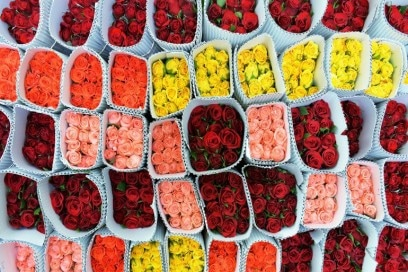 fioricolorati