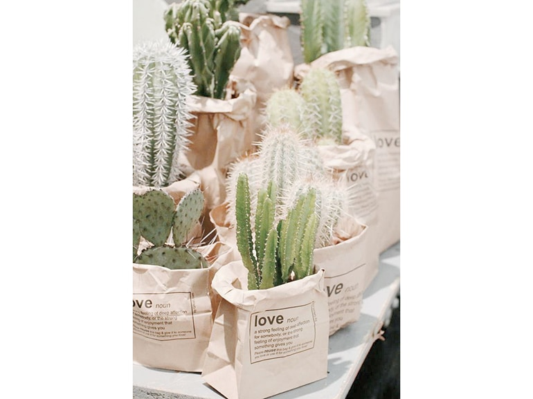 22.cactus-verde-composizione-piante-sacchetti-carta