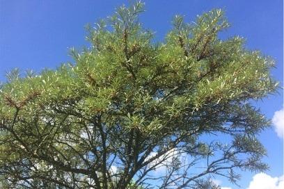 Weleda-giardini-collezioni-pe2016-giardini-6-olivellospinoso