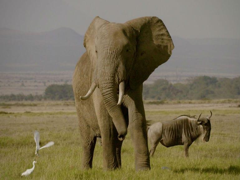 documentari-netflix-the-ivory-game
