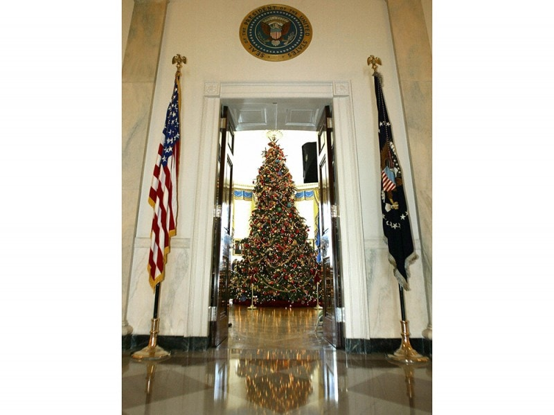 One of the 41 Christmas trees displayed