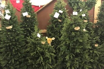 come si sceglie albero