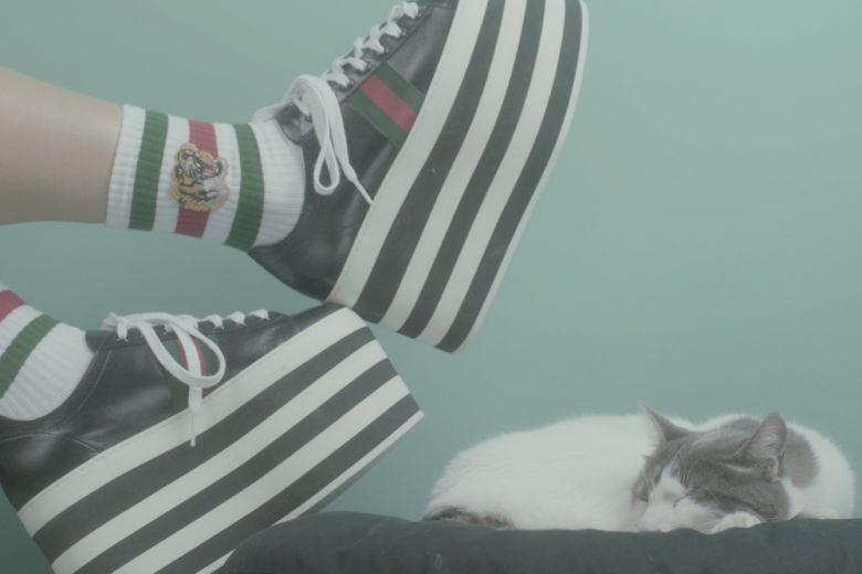Gli accessori preferiti dai gattini per l'inverno 2016