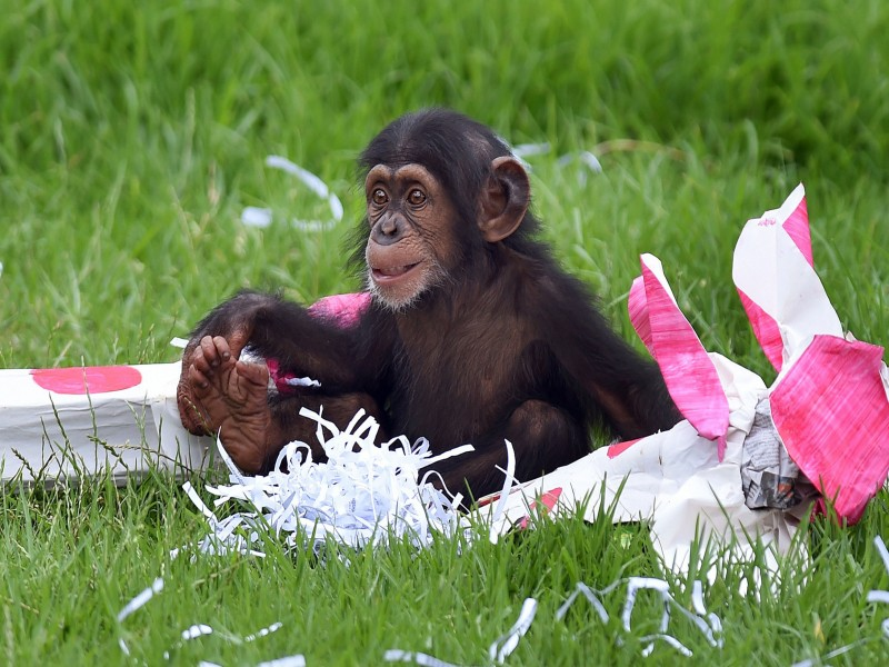 Suggerimenti-e-consigli-per-riciclare-i-regali-di-Natale-donarlo-darlo-in-beneficienza