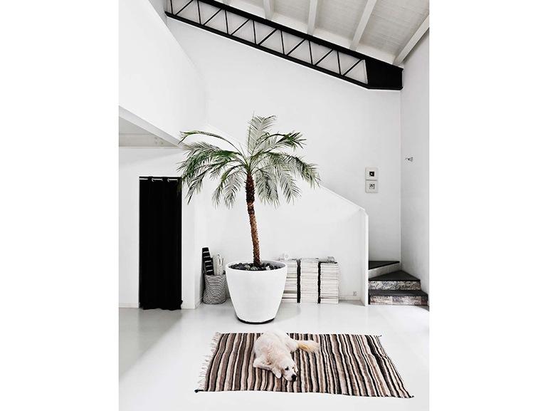 9-Metti-in-albero-in-casa-10-interni-a-contatto-diretto-con-la-natura
