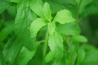 Colazione-dolce-ma-light-con-la-stevia-benefici-salute-benessere-dimagrire