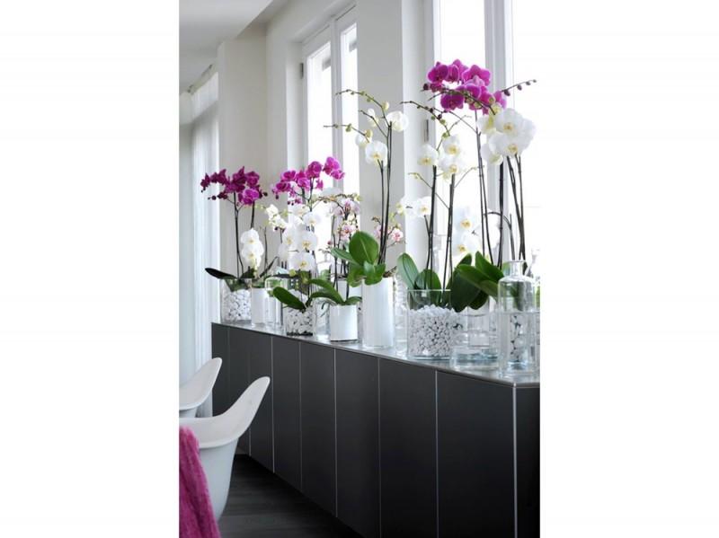 orchidsplus.com2