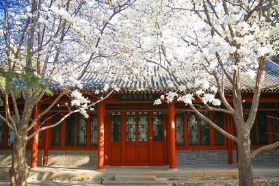 tsinghua università