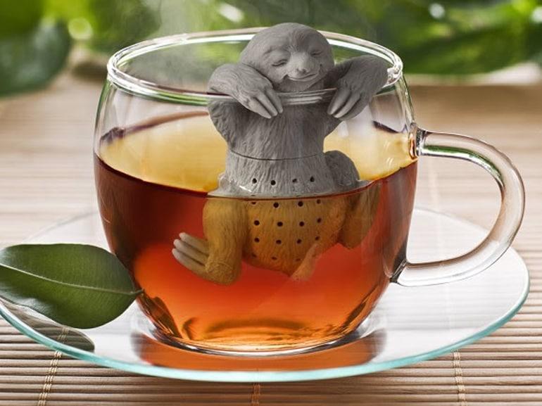 infusore bradipo