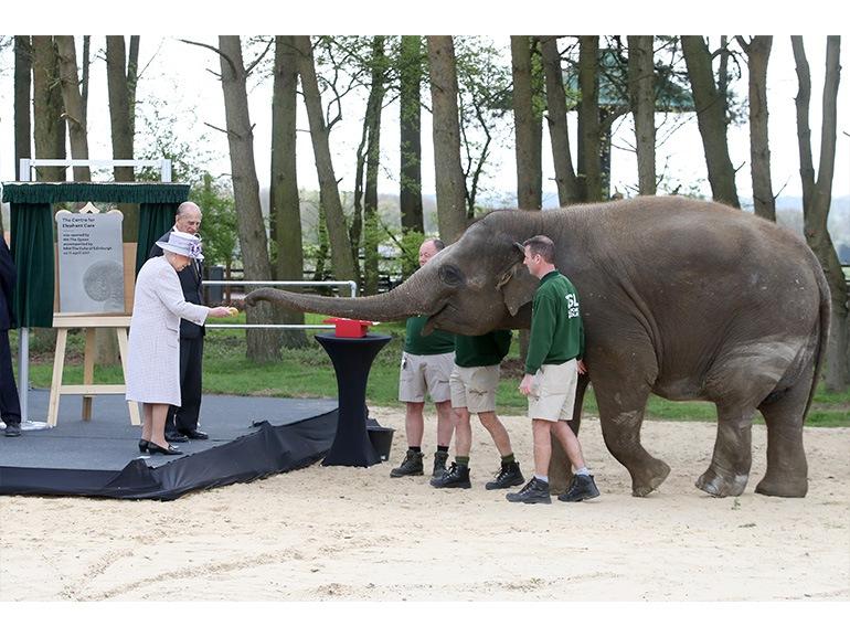 regina elisabetta elefante