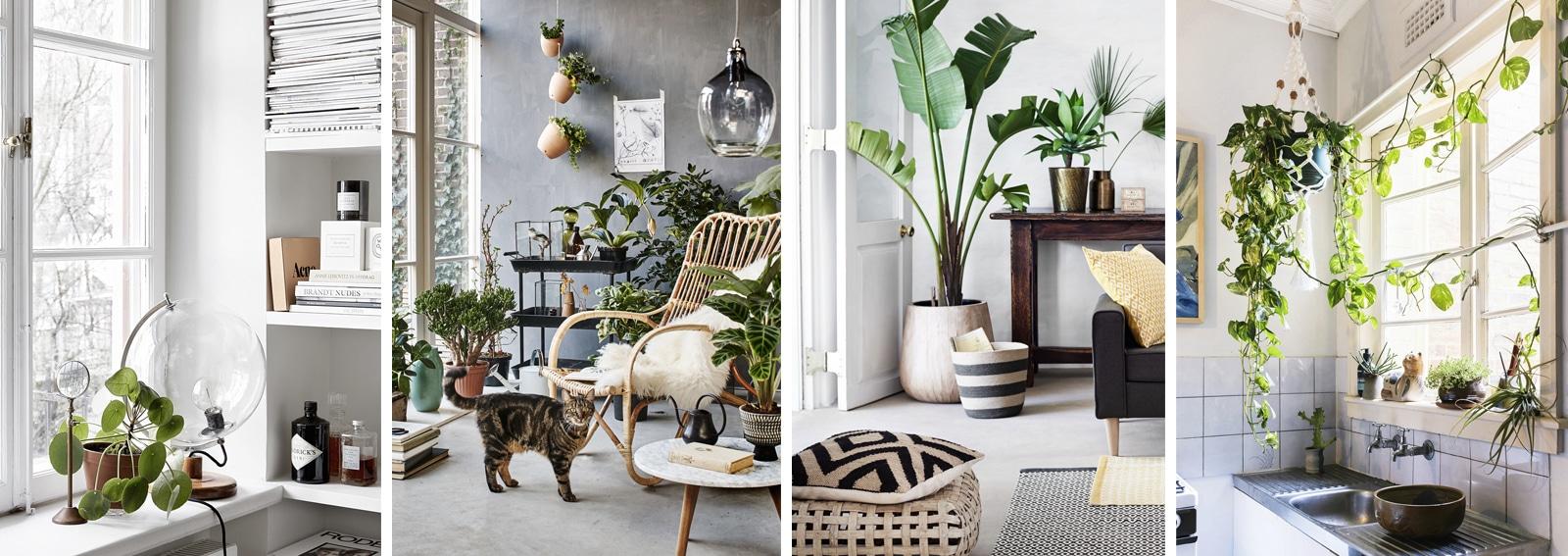 Piante Da Arredo Appartamento le piante d'appartamento più belle per arredare la casa - grazia