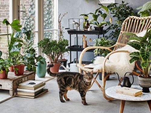 le piante d'appartamento più belle per arredare la casa - grazia