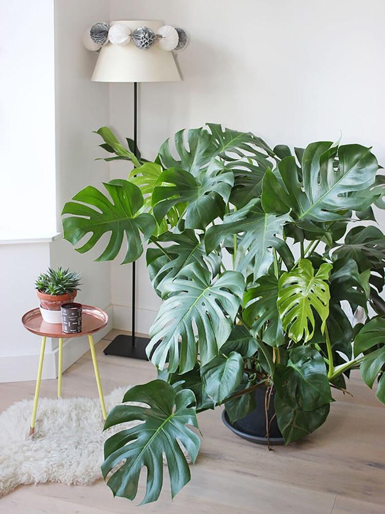 mostrea-plant