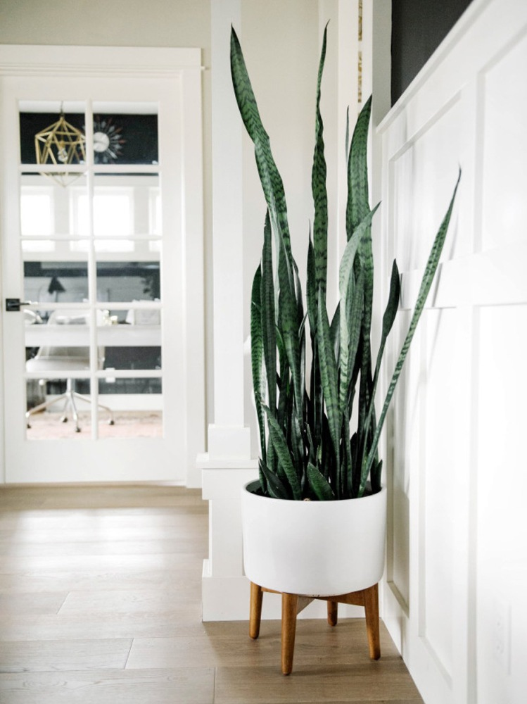 snake-plant-housewarming-gift