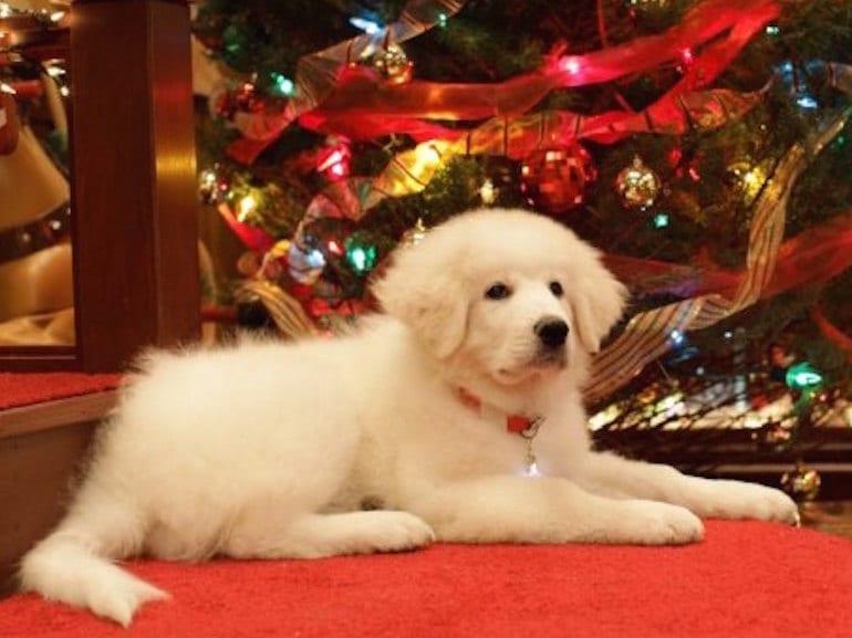 Apriamo I Regali Di Natale.Perche Ci Piace Un Sacco L Atmosfera Natalizia Ma Non Il Giorno Di Natale Grazia It