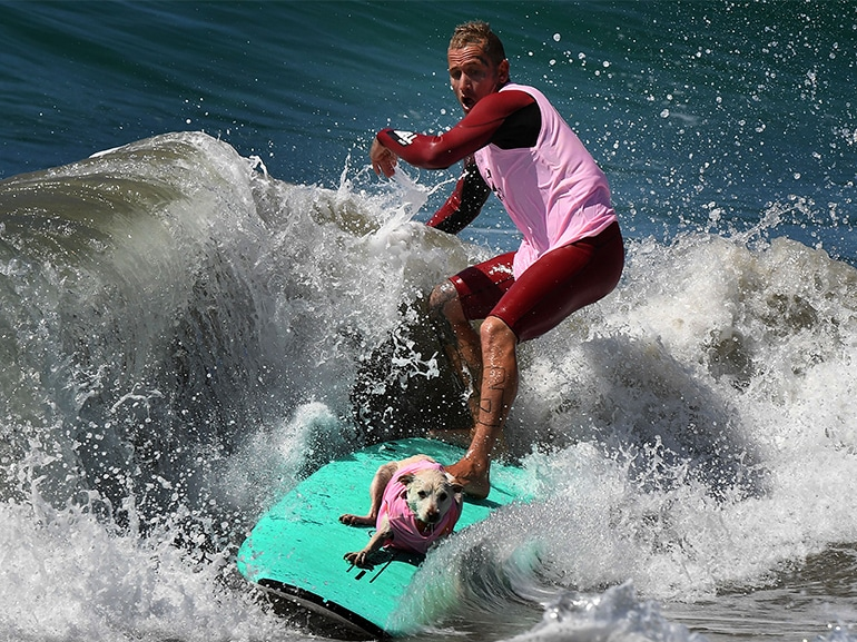 cane surf