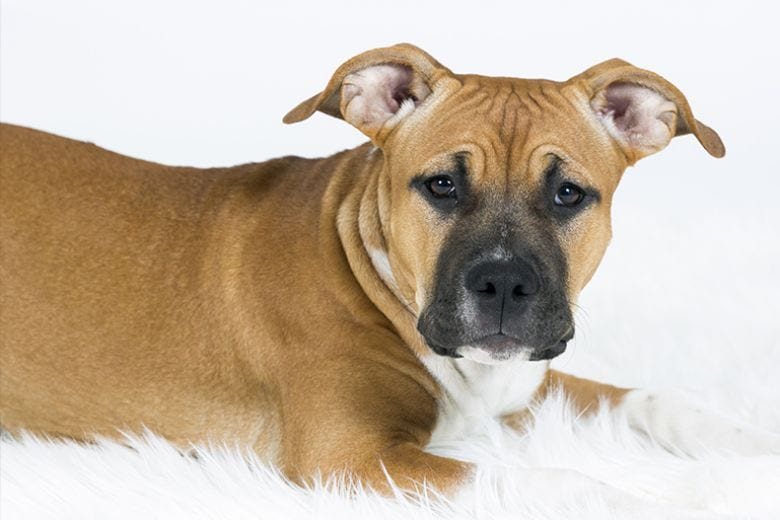 Chi ha un cane vive più a lungo, lo dice la scienza