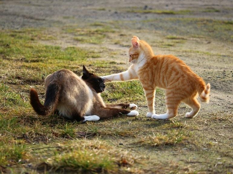 gatti lotta