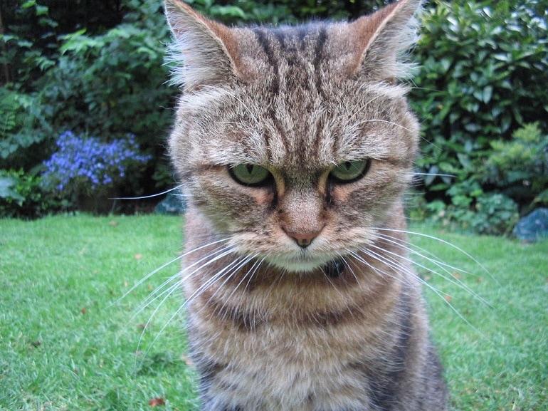 gatto resiliente