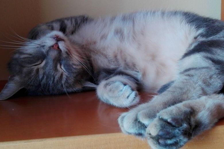Dieci lezioni di vita che dovresti imparare dal tuo gatto
