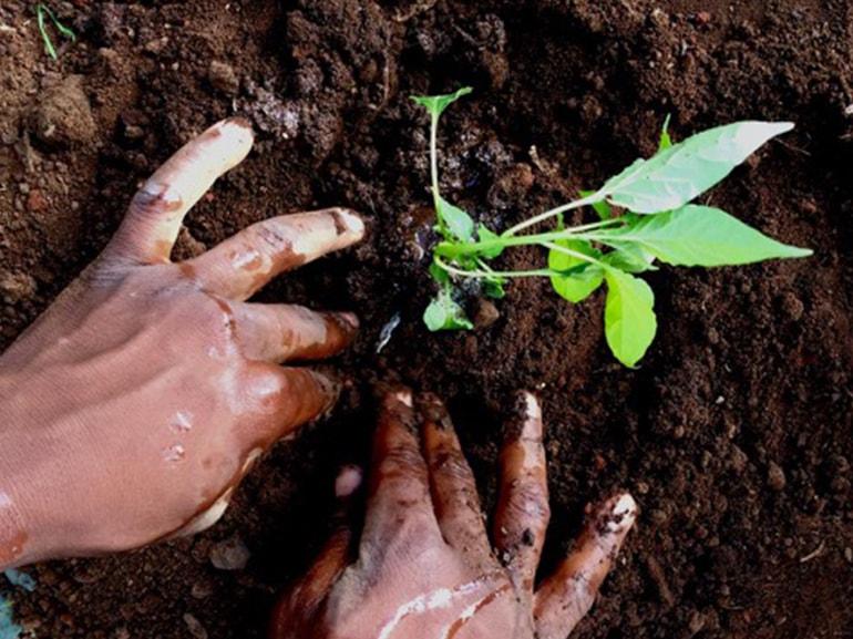 terra coltivata