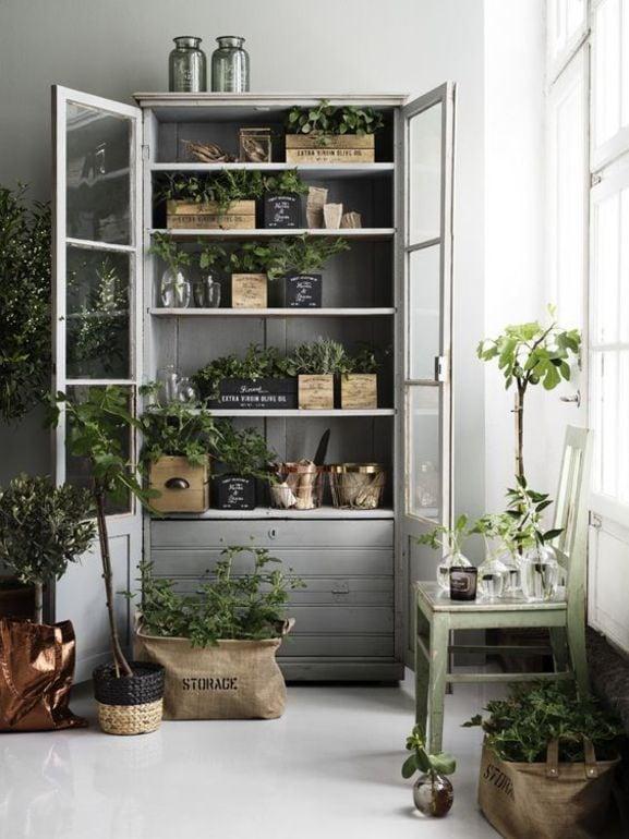 Display piante