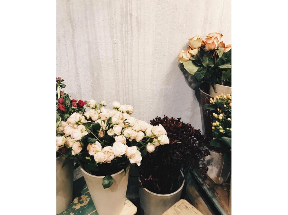 Fiori-i-giardini-di-giava