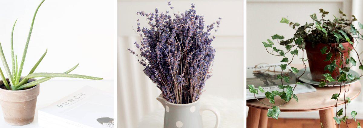 6 piante che aiutano a dormire meglio perfette per la camera da ...