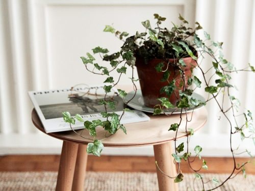 6 piante che aiutano a dormire meglio perfette per la camera ...