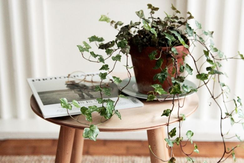 6 piante che aiutano a dormire meglio perfette per la camera da letto