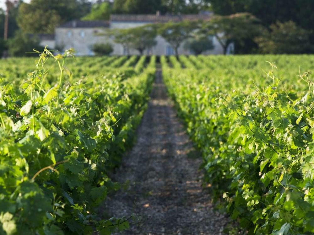 FOTO 2 Vines-outside-1