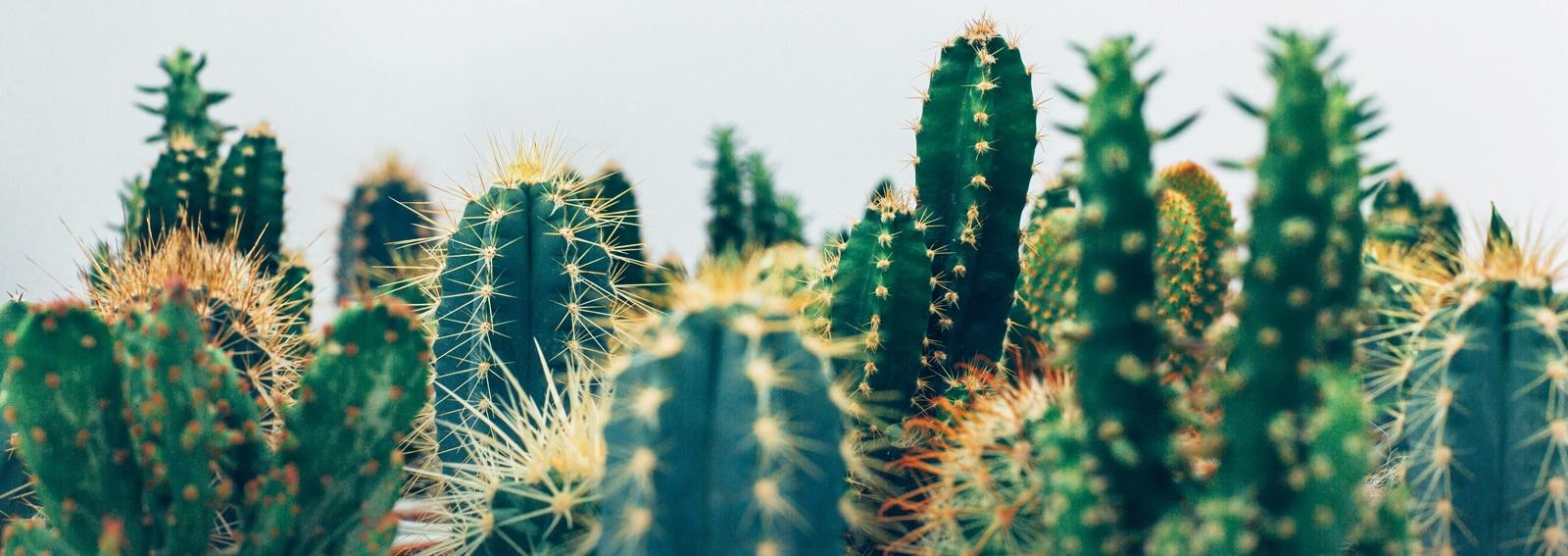 cover-idee-creative-piante-grasse-dektop