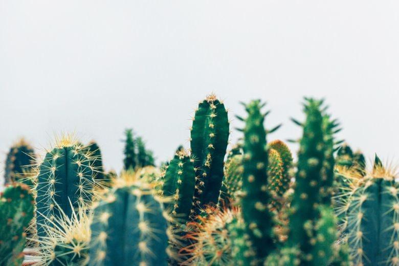 10 idee originali per decorare la casa con le piante grasse