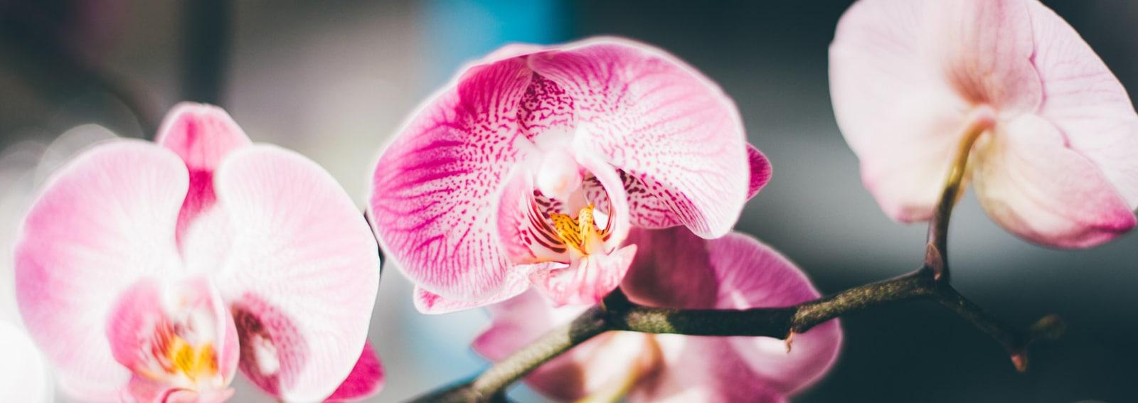 cover-idee-arredare-orchidee-desktop