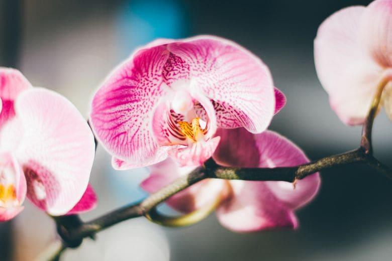 8 idee originali per decorare la casa con le orchidee