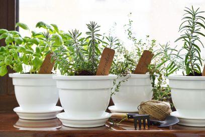 10 idee originali per decorare la cucina con le piante aromatiche