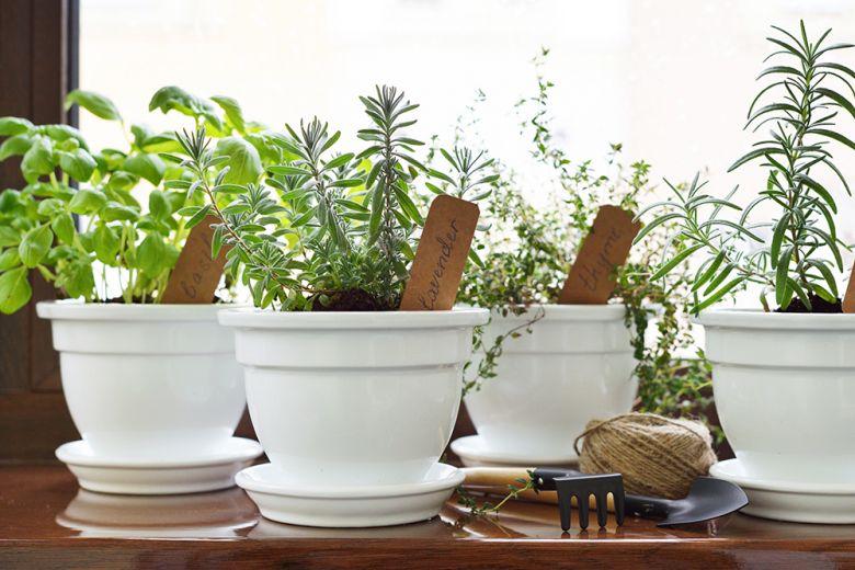 Piante Aromatiche In Cucina. Latest Piante Aromatiche In Cucina With ...
